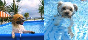 白浜オーシャンリゾート プール