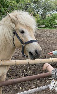 秋元牧場 馬